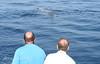 Ballenas (y) calvas (Quico Pérez-Ventana) Tags: estrecho gibraltar cetáceos avistamiento ballena