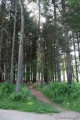 Side Trail into Conifers (Imagination04) Tags: cuba marsh forest preserve lake county il illinois trail woods trees conifers fujifilm fujinon xf 18135mm 18 135 f3556 lm ois wr xt1