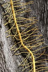 "Sculpture - ""Poison Ivy"" (dckellyphoto) Tags: washingtondc washington districtofcolumbia dc 2018 kreegermuseum kreeger museum modernart art artmuseum"