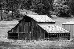 DSCF5138-2098.jpg (RHMImages) Tags: xt2 landscape monochrome fuji bnw nevadacounty blackandwhite farm ranch grassvalley fujifilm barn