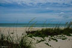 Just A Little Breeze! (BGDL) Tags: nikond7000 urban landscape nikkor18105mm3556g lightroomcc nokomisbeach seascape bgdl florida beachgrass gulfofmexico specialplaces week21 weeklytheme flickrlounge