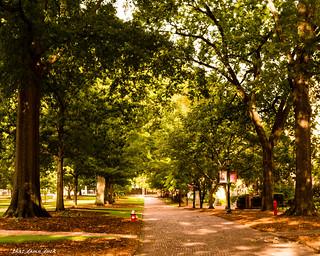 University of South Carolina Pathway