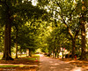 University of South Carolina Pathway (that_damn_duck) Tags: universityofsouthcarolina college walkway trees nature pathway bricks brickwork sunlight nikon