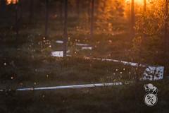 Sunset path (Storm'sEndPhoto) Tags: 2018 anselsiegenthaler stormsendphotography stormsendphoto adventure bog camping eveninglight explore fullframe iltavalo kansallipuisto kauhaneva kauhanevankansallispuisto mire myre nationalpark neva nikon nikonphotography retkeily sunset swamp