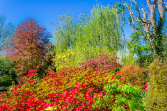201804200663 (Leow Sama) Tags: jardin deau claude monet giverny watergarden
