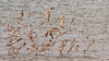 Flock (Arturo Nahum) Tags: australia aves animal arturonahum ave airelibre birdwatcher bird birds wildflife wild nature naturaleza naturephotography pajaro pajaros queensland