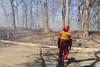 Fireman (Nicoli OZ Mathews) Tags: fire people highpark bushfire prescribedburn smoke sigma sigma1750 toronto