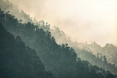 Bhutan: Layers II. (icarium.imagery) Tags: travel bhutan canoneos5dmarkiv captureone drukyul fog gasa green haze himalaya landscape lost mist moody nature remote trees valley slopes layers analogefex texture forest sigma100400mmf563dgoshsm
