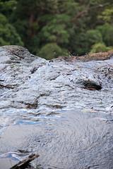 Australia_2018-168.jpg (emmachachere) Tags: subtropical trees hike waterfall boatride springbrook australia rainforest kanagroo animals koala brisbane boat lonepinekoalasanctuary
