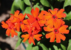 Flowers (Hugo von Schreck) Tags: hugovonschreck flower blume blüte macro makro canoneos5dsr tamron28300mmf3563divcpzda010