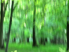 the beginning of summer XII (vertblu) Tags: icm intentionalcameramovement inthewoods intothewoods summer summertime woods woodland forest green greens shadesofgreen blurred blur blurry trees vertblu luscious lusciousgreen