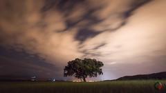Soledad. (Carlos Velayos) Tags: nocturna nightly arbol tree noche night cielo sky nubes clouds soledad loneliness largaexposicion longexposure paisaje landscape hierba grass