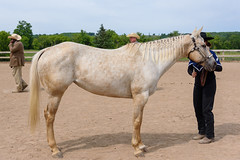 JBC_4724.jpg (Jim Babbage) Tags: krahc horseshow appaloosa horses 2018