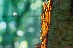 ginger-9360 (Theregsy) Tags: markregan nikond3 nikond800 sigma105mmf28macro sigma50500mm theregsymarkreganphotography watchtreenaturereserve wildlife british wild life