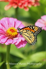Manoff Farms  (22) (Framemaker 2014) Tags: mangas farm market gardens bucks county southeastern pennsylvania flowers united states america new hope
