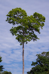 Green heart (Marcelino Dias) Tags: tree love heart national park green nature forest bahia