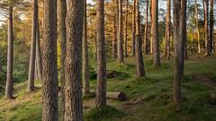 Fallen (alexcalver) Tags: sigma1750f28 canon80d england uk lakedistrict tarnhaws cumbria woodland
