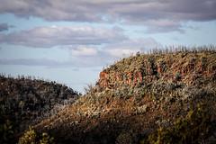 Somewhere in the Warrumbungles (WayneG58) Tags: canon winter roadtrip rocks trees landscape ridge afternoon australia nsw nationalpark coonabarabran warrumbungles