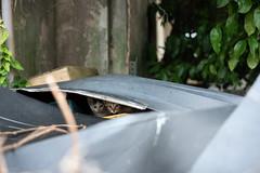 猫 (fumi*23) Tags: ilce7rm3 sony 55mm sel55f18z katze gato neko cat chat feline animal alley street sonnartfe55mmf18za sonnar zeiss miyazaki emount a7r3 ねこ 猫 kitten 仔猫 宮崎