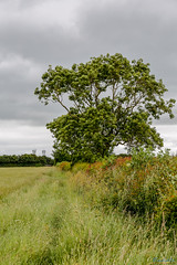 Nettle hill Circular Walk 17th June 2018 (boddle (Steve Hart)) Tags: nettle hill circular walk 17th june 2018 steve hart boddle steven bruce wyke road wyken coventry united kingdon england great britain canon 5d mk4 6d 100400mm is usm ii 2470mm standard wild wilds wildlife life nature natural bird birds flowers flower fungii fungus insect insects spiders butterfly moth butterflies moths creepy crawley winter spring summer autumn seasons sunset weather sun sky cloud clouds panoramic landscape rugbydistrict unitedkingdom gb