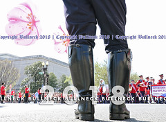 Cherry Blossom Parade '18 -- 340 (Bullneck) Tags: spring federalcity washingtondc americana cherryblossomparade parade cops police mpd mpdc dcpolice metropolitanpolicedepartment uniform heroes macho toughguy biglug bullgoons motorcops motorcyclecops motorcyclepolice boots breeches winnerofthebullneckblueribbonforkickasscops