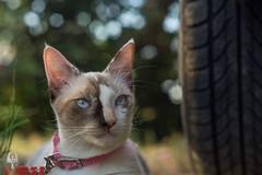 Personality ([[^Raúl^]]) Tags: cats cat kittens puss kitten chatons chat gatos gatitos gatita animal pet mascota friend amigo family familia outdoor exteriores naturaleza nature natural