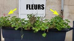 Fleurissement de Verberie : De bien jolies fleurs