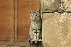 Viiglante (Redstone...) Tags: seleccionar animales gatos cat