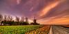 """Old Dutch mill """"De Hoop"""". (Alex-de-Haas) Tags: 11mm adobe blackstone d850 dutch hdr holland irix irix11mm irixblackstone lightroom nederland nederlands netherlands nikon nikond850 noordholland photomatix beautiful beauty bloem bloemen bloementeelt bloemenvelden cirrus floriculture flower flowerfields flowers landscape landschaft landschap lente lucht mooi polder skies sky spring sun sundown sunset tulip tulips tulp tulpen zonsondergang"""