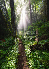 Safehaven (John Westrock) Tags: nature forest trail path light sun fog foggy trees issaquah tigermountain washingtonstate pacificnorthwest canoneos5dmarkiii canonef1635mmf4lis