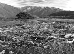 Driftwood Deposit _ bw (Joe Josephs: 3,166,284 views - thank you) Tags: bigsur california californiacoast californialandscape pacificcoasthighway pacificocean travel travelphotography westcoast scenic wood storms californiaphotography ecology nature naturephotography bw blackandwhitephotography blackandwhite monochrome