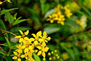 Mounts Flowers67