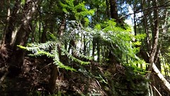 Clear Creek Metro Park (dankeck) Tags: pine branch needles trail path forest woods metroparks ohio columbusandfranklincountymetropolitanparkdistrict fairfieldcounty centralohio park
