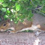 squirrel 7 8 18 thumbnail