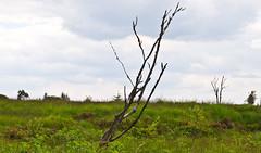 Hochmoor / Hill moor # 1 (schreibtnix on 'n off) Tags: reisen travelling belgien belgium nature landschaft landscape hohesvenn hochmoor hillmoor baumstrunk butt strukturen structures olympuse5 schreibtnix