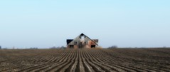 at the end of the rows (David Sebben) Tags: rows cornfield lonesome barn knox illinois