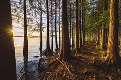 Tranquil Path (Picocoon图茧) Tags: lake landscape sunset star burst tree forest lakeshore lakeside nature summer dusk groove woods