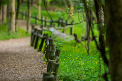 Fireflies at Dusk (Michael Allen Siebold (Getty Images Contributor)) Tags: beauty fireflies greenbackground nopeople outdoors photography radnorlake woodland branch fence fencepost forest green landscape lightningbugs nature path post summer trail tree trees woods composite