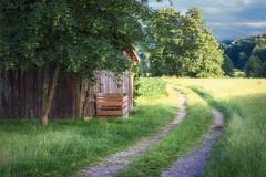 Feldweg (Hans Zitzler) Tags: barn tree summer road trail field golden green wood