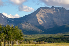 Standing tall (hey ~ it's me lea) Tags: watertonnationalpark alberta mountains canada rockymountains foothills