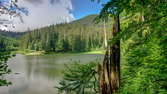 Synevyr Lake. HDR (kud4ipad) Tags: 2017 synevyr ukraine zakarpattia lake landscape mountain tree