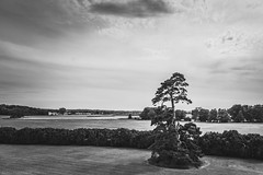 Standing tall (The Frustrated Photog (Anthony) ADPphotography) Tags: berkeley berkeleycastle category england gloucestershire landscape places travel tree trees bush fields travelphotography countryside rural pine blackandwhite bw whiteandblack monochrome mono sky cloudysky cloudy canon1585mm canon70d canon outdoor greatbrtitain unitedkingdom uk
