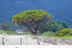 620 - Bastia au bord de la lagune (paspog) Tags: bastia lagune corse corsica france mai may 2018 pin pins pinetree pinetrees
