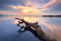 Kranji Special (Scintt) Tags: singapore kranji beach sea ocean shore sky clouds sunrise sun light glow early morning dawn log tree long exposure slow shutter minimalism minimal lone subject single nature landscape seascape skyline horizon city still calm frozen colours vibrant surreal epic dramatic jon chiang photography scintillation scintt haidafilter nanopro neutraldensity mood deadfall trunk branch texture smooth natural tide intertidal