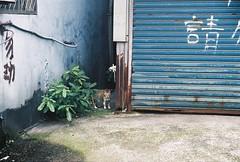 (YL.H) Tags: film analog agfa taiwan 底片 板橋 浮洲 canon 貓 cat