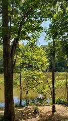 Through the Trees (grinnin1110) Tags: charlotte unitedstatesofamerica sunny kingfisherpond rockyriverroad northamerica woods northcarolina afternoon mensapicnic outdoor reedycreekpark usa mecklenburgcounty nc