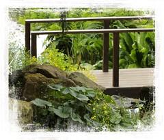 The Little Bridge (Audrey A Jackson) Tags: canon60d botanicalgardens birmingham bridge shrubs plants buttercups rocks timber ferns nature