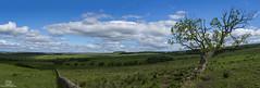 A Border Sky... (CamraMan.) Tags: askertoncastle border sky tree wall panoramic sonya7 bewcastlefells bewcastle cumbria