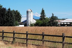 Thank You Olympus! (PDX Bailey) Tags: mount hood mt mountain silo hay barn rural fence perspective telephoto olympus lens test testing blue sky