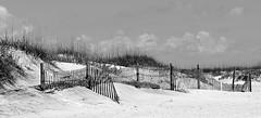 Fences (pjpink) Tags: beach ocean sea fence fencing blackandwhite bw monochrome coast coastal eastcoast crystalcoast sand shore capelookout northcarolina nc carolina may 2018 spring pjpink 2catswithcameras